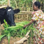 Heifer International Donation